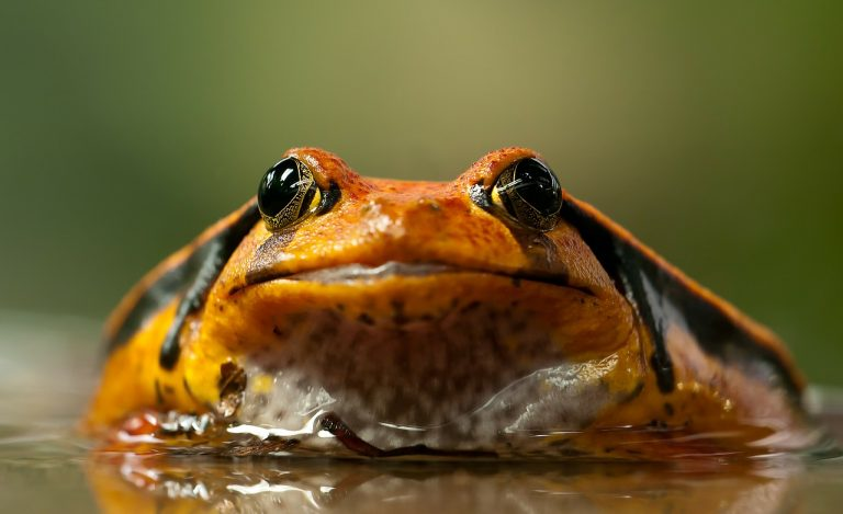 frog-208591_1280